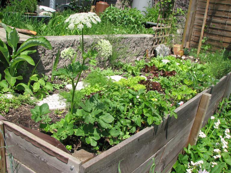 Tucowws.com > Hochbeet Bepflanzen Was Passt Zusammen ... Hochbeet Balkon Bauen Bepflanzen