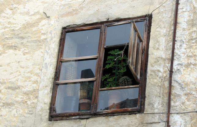 Fenster in graub nden mit pelargonium crispum for Wohnung pflanzen