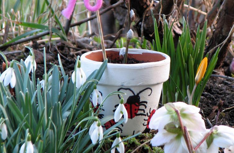 kleines schneegl ckchen galanthus nivalis. Black Bedroom Furniture Sets. Home Design Ideas