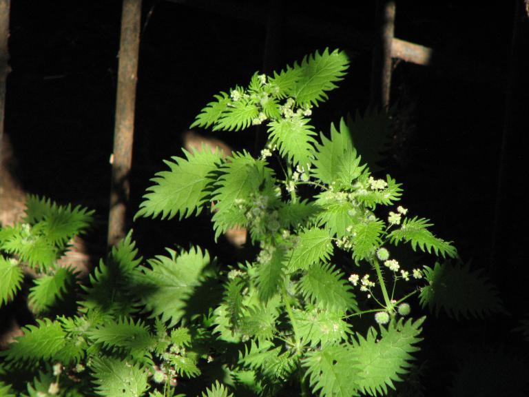 Diese 5 tödlichen Pflanzen können Sie umbringen! | Krasse Storys und ...