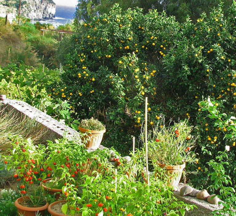 glockenpaprika riesiger orangenbaum ischia. Black Bedroom Furniture Sets. Home Design Ideas