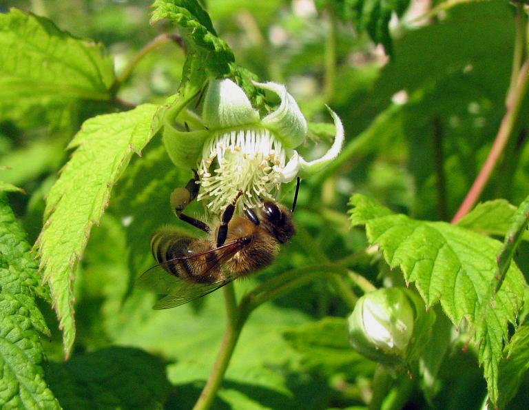 5 for Fruchtfliegen pflanzen
