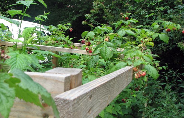 6 for Fruchtfliegen in pflanzen