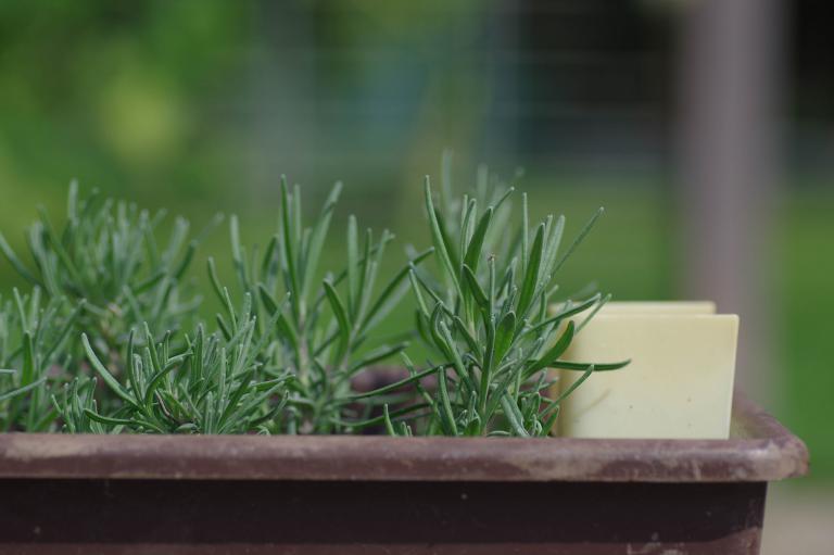 Häufig Pflanzen vermehren durch Stecklinge, Ausläufer, Absenker, Teilung JP31