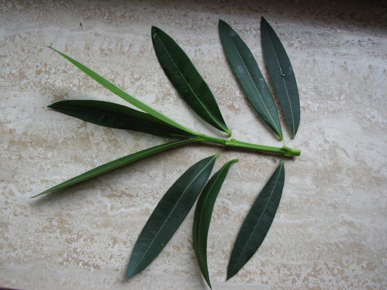 Pflanzen Vermehren Durch Stecklinge Auslaufer Absenker Teilung