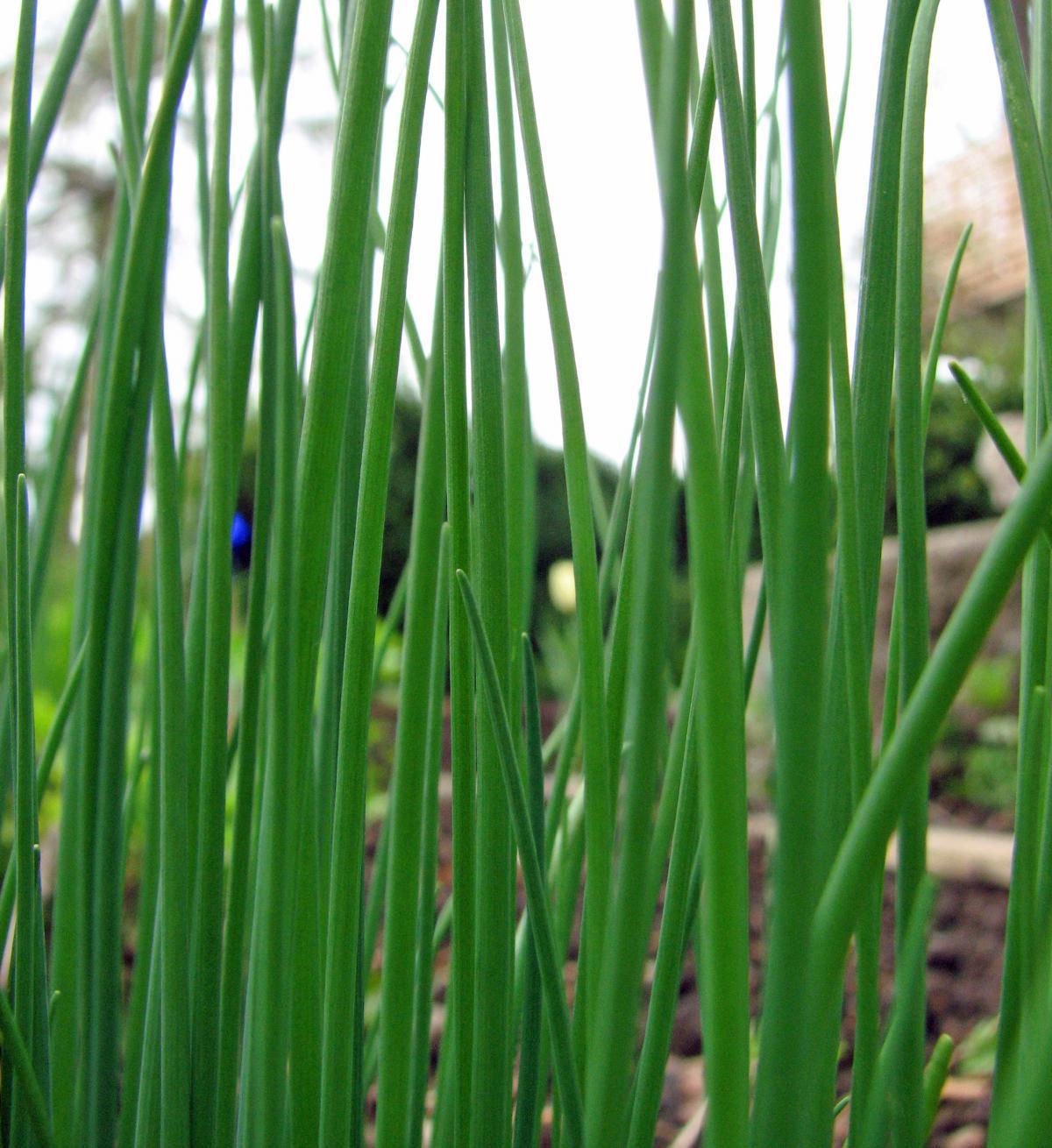 Grune Farbe Wow : Finden Sie Blühpflanzen nach Ihrer Farbe!