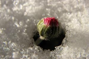 Vorfrühling - Die Gänseblümchen sind wieder da.