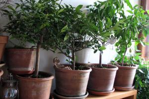 Die Kübelpflanzen dürfen noch nicht ins Freie.