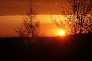 Glühender Sonnenuntergang hinter Grafik noch unbelaubter Bäume