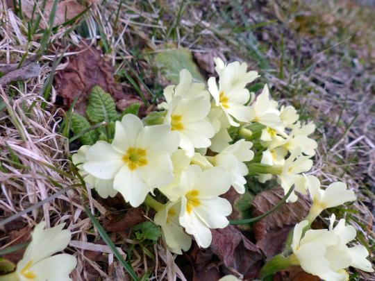 Prächtig Schneckenresistente Blütenpflanzen #TS_34