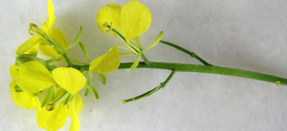 Pflanzenteile kennenlernen und bezeichnen