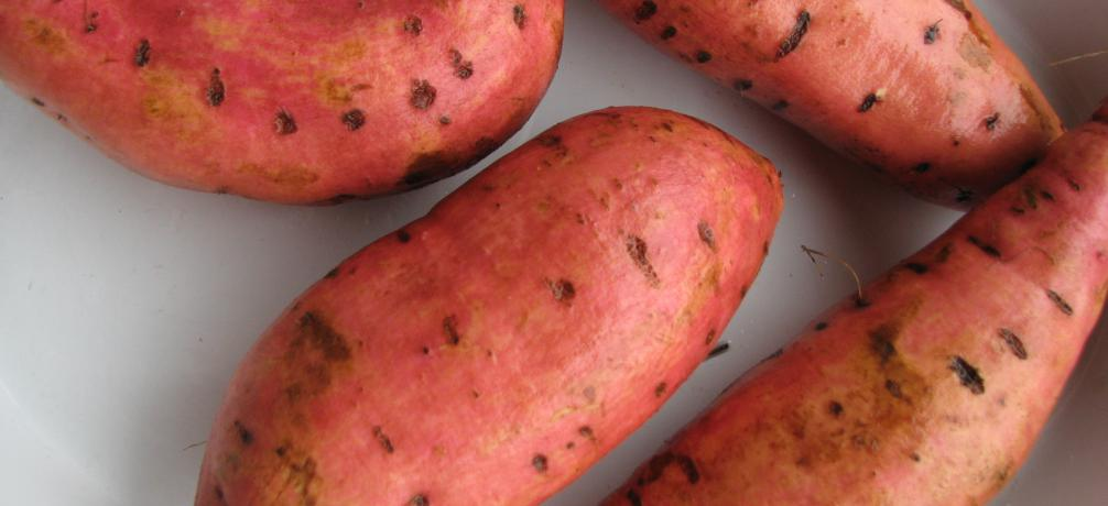 Süßkartoffel, Ipomoea batatas