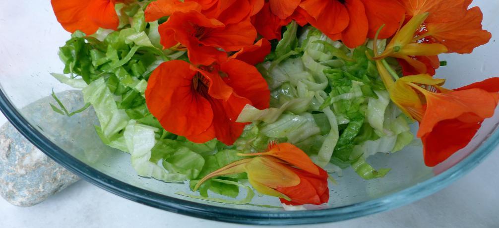 geschnittener zuckerhut salat mit kapuzinerkresse. Black Bedroom Furniture Sets. Home Design Ideas